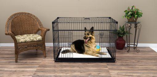 XL dog in crate